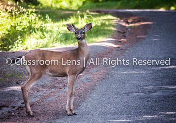 Classroom Lens Stock Photo - Deer