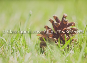 Classroom Lens Stock Photo -  Pinecone