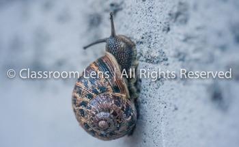 Classroom Lens Stock Photo - Snail