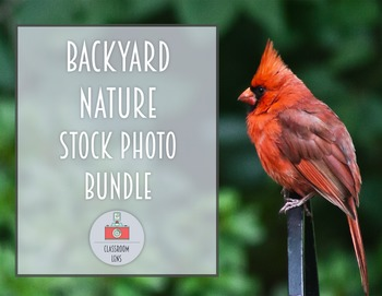 Classroom Lens Stock Photos - Backyard Nature Bundle