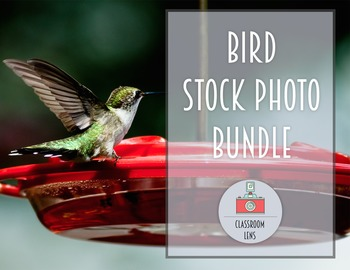 Classroom Lens Stock Photos - Bird Bundle