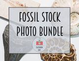 Classroom Lens Stock Photos - Fossil Bundle