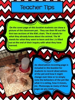 Class Pet Observation and Research Recording Booklet
