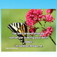 Classroom Posters, 10 Inspirational Nature Posters
