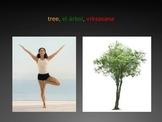 Classroom Yoga Book