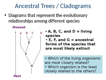 Cladogram Powerpoint with Review Questions
