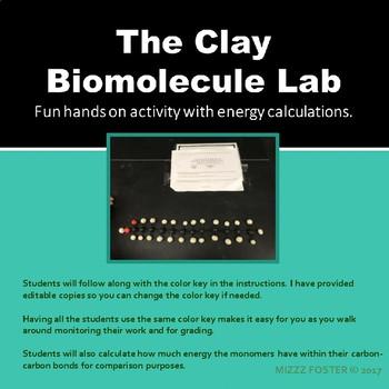 Clay Biomolecule Lab Activity