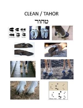 Clean & Unclean hooves