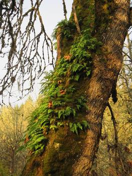 Clip Art * 100 Photographs: Pacific Northwest TREES Foliage Life Cycle & Seasons