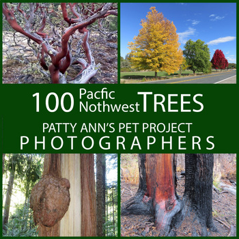 TREES Pacific Northwest Clip Art * 100 Photographs: Foliage Life Cycle & Seasons
