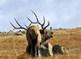 Clip Art * 125 Photographs >BiG Variety of Wildlife Animals in Natural Habitats