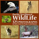 Wildlife Clip Art * 125 Photographs Eagles Bears Coyotes E