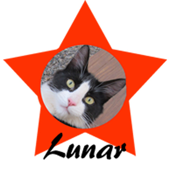 Clip Art * 135 Photographs with 10 Awesome Kitty Cat Stars ~Unique & Fun Visuals