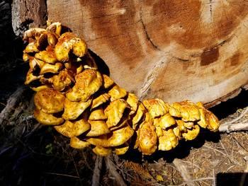 Clip Art * 75 Photographs of Fungi: Mushrooms & Organisms Grown&Found in Nature