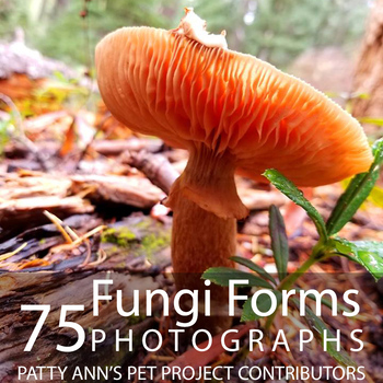 Fungi Mushrooms Clip Art * 75 Photographs of Organisms Grown & Found in Nature