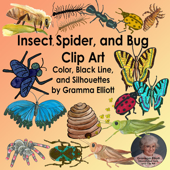 Insect and Bugs and Spider Clip Art   Color and Black Line and Silhouette