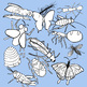 Clip Art - Realistic and Whimsical - Insects Mostly - Colo