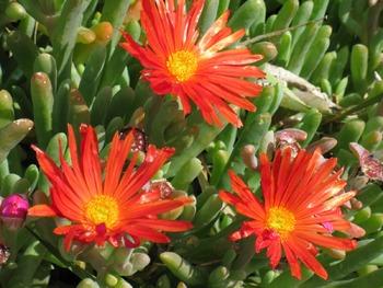 Clip Art - Flowers