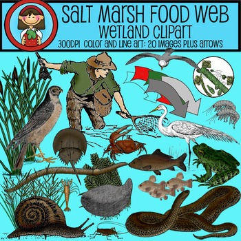 Clip Art Food Web - SALT MARSH Wetlands - Ecology Biology Environment