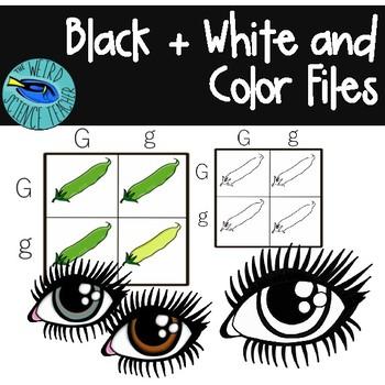 Clip Art: Genetics - 20 PNG Images