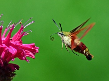 Clip Art - Insects