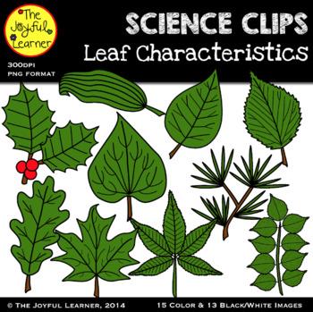 Clip Art: Leaf Characteristics/Types