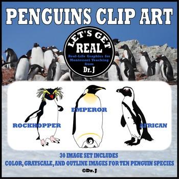 Clip Art Penguins of the World