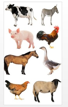 Clip Art: Photographs of farm animals , transparencies