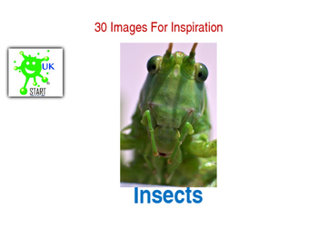 Clip Art Photos of Insects