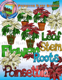 Clip Art: Poinsettia Plant Science