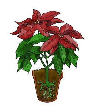 Clip Art: Poinsettia Plant Science