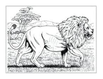 Clip Art & Posters | 65 Illustrations | Animals (K-7)