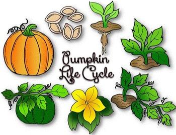 Clip Art~ Pumpkin Life Cycle