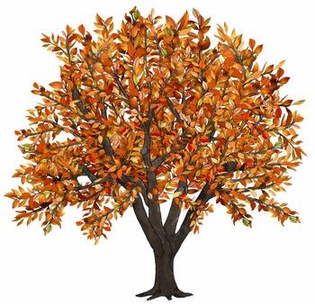 Clip Art   Seasons of an Apple Tree