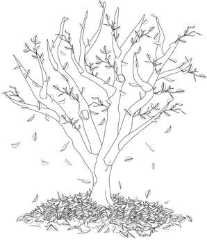 Clip Art  Seasons of an Apple Tree Line Drawings