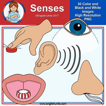 Clip Art - Senses