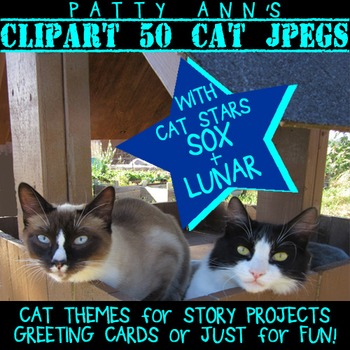 Clip Art Photo CATS - 50 Photographs > Themes for Projects & Greeting Cards