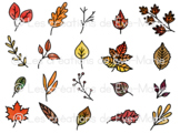 Clipart - Automn leaves