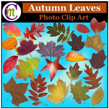 Clipart ♦ Autumn Leaves Photo Clip Art