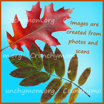 Autumn Leaves Photo Clip Art
