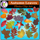 Clipart ♦ Autumn Leaves Photo Clipart (Clip Art)