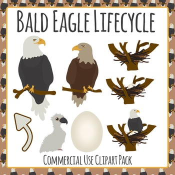 Bald Eagle Life Cycle Clip Art Pack for Commercial Use