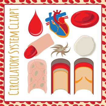 Circulatory System / Human Blood Clip Art Pack for Commercial Use