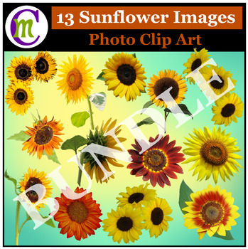 Flower Photo Clipart Bundle 1