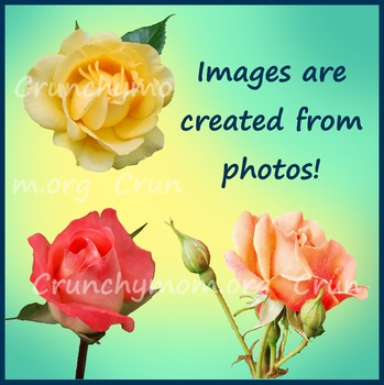 Roses Photo Clipart