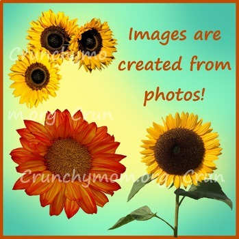 Sunflowers Photo Clipart