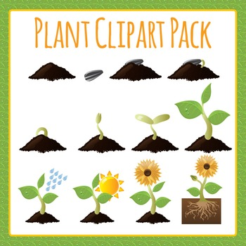Plant Diagrams Science Commercial Use Clip Art Pack