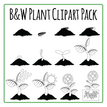 Plant Diagrams Commercial Use Clip Art Pack - black and wh