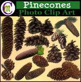 Pinecones Clip Art