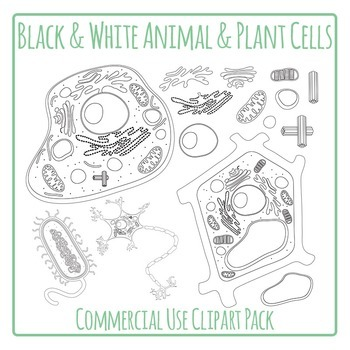 Cells - Plant and Animal Cells Diagrams in Black and White ...